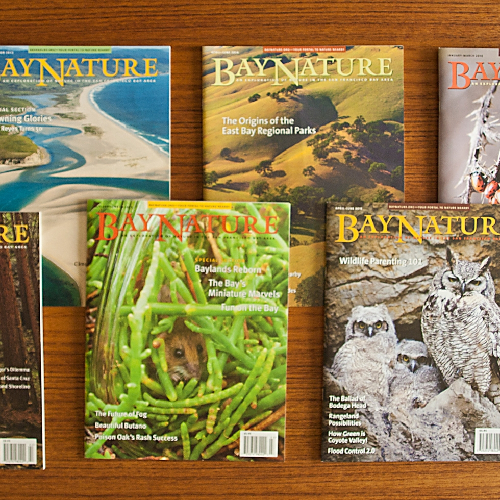 Bay Nature Magazines