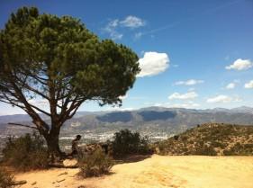 Wisdom Tree, Griffith Park (Los Angeles, CA)
