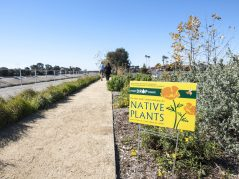 Every Drop Counts: Native Plants